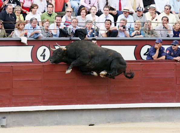 toro volador